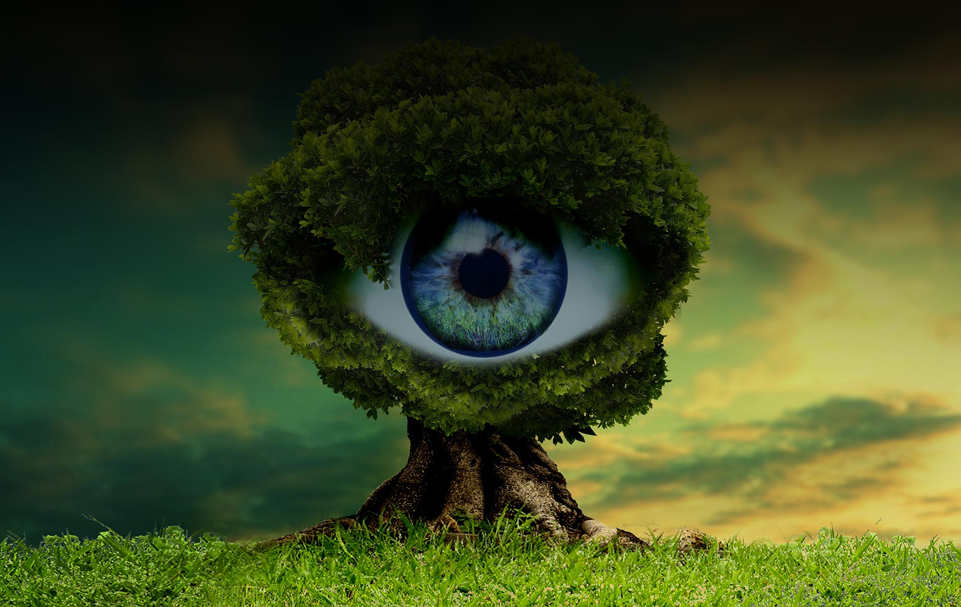 Background Auge
